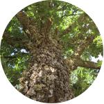 DAPR-Fernstudium geht auch unter einem Baum...
